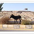 沙漠生活照2008