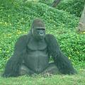 2008.10.26-木柵動物園