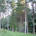 紐西蘭的森林