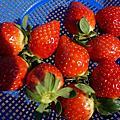 草莓Railbike+燈節一日遊