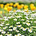 ♥ 桃源仙谷 四月花卉 ♥