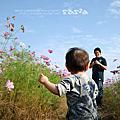 [1y1m19d]2010大寮花海節
