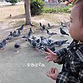 [1y1m24d]鴿子與我