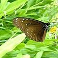20080623士林官邸彩葉植物展