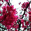 20110209花季前夕