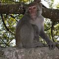 材山猴子寫真集