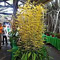 台南蘭花展-在安平樹屋
