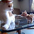 小小貓與小小貓