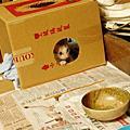 小貓芝麻的獨照