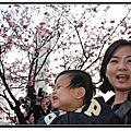 2012-02-05 輔大&信義之櫻