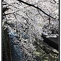 2012-04-08 東京賞櫻 day4