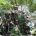 PAI TREE HOUSE