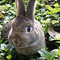 兔兔逛大街