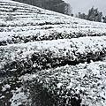 石碇下雪了,