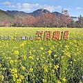 20191123~25福壽山 合歡溪步道 武陵 (武陵農場)