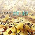 20191123~25福壽山 合歡溪步道 武陵 (武陵銀杏)