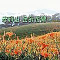20200821~24赤柯山金針花開(中)