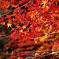 2010.11-日本北陸-黑部立山.合掌村.兼六園.上三之町.飛驒祭之森.香嵐溪 五日遊