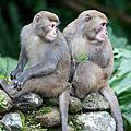 20120128 宜蘭 仁山植物園 - 猴群出沒篇