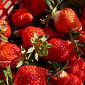 大湖-順路來草莓園