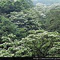 2012 植物紀錄