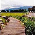 [花蓮] 池上大坡池