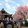 [東京] 2013 東京賞櫻精華版