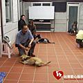 宜蘭愛心服務犬高級進修班畢業合照