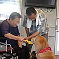 愛心服務犬 - 養護院服務