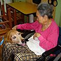 愛心服務犬 - 敬老院服務照