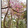 2011.0.3.26中山公園隨拍