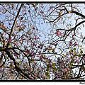 2011.04.02中山公園隨拍