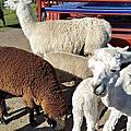 2105 1227 羅吐魯阿(皇后號遊湖)、愛哥頓牧場、毛利文化村、天空之城自助餐