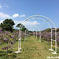 107.3.31.淡水 - 紫藤咖啡園 欣賞季節限定的紫色浪漫