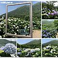 108.5.12.竹子湖-花與樹繡球花田