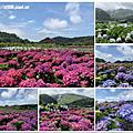 108.5.30.(1)竹子湖-花谷繡球花園