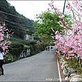 春遊阿里山1/2草坪頭&夫妻樹&塔塔加遊客中心