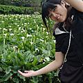 20110321竹子湖--芋守緣