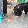 2009/05/30桃園寵物創意走秀大賽