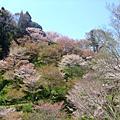 奈良吉野山下中上千本櫻完全攻略