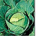 蔬果種子-高麗菜