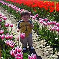 Tulip Festival 07