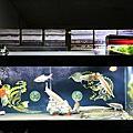 180809_七呎魚缸