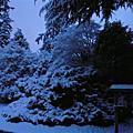 1/28 雪景