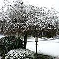 4/18 春雪