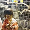 2013.11.17小港淨園農場[動物 夜景 飛機 ]