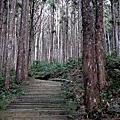 藤枝國家森林遊樂區巡禮