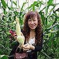 快樂體驗採玉米