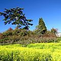 福壽山農場二日遊