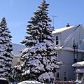 2010二月滑雪記